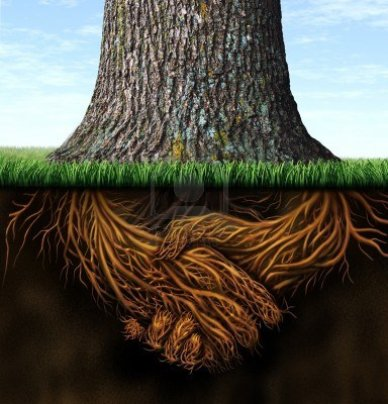 15491712-strong-deep-business-roots-as-a-tree-trunk-with-the-root-in-the-shape-of-a-hand-shake-as-a-symbol-of